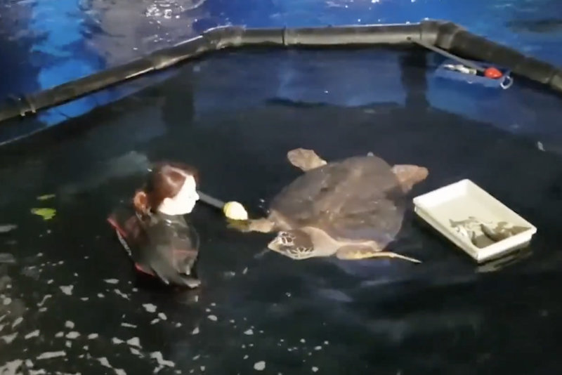 The MAID (Marine Animal Isolation Device) used at The Deep to isolate Turtles