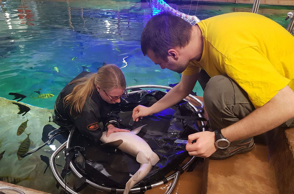 Health checkups for the marine animals at Budapest Zoo & Botanical Garden