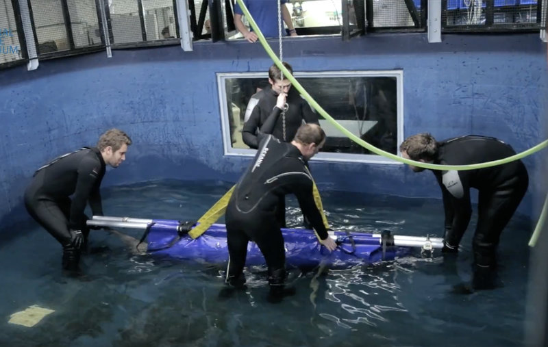 Our Shark Carrier helps the National Marine Aquarium to move Lemon Sharks