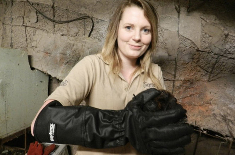 Handling Bats at Chester Zoo